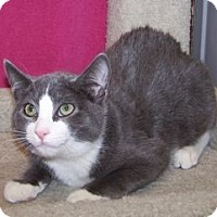 Adopt A Pet :: K-Emery4-Xavier - Colorado Springs, CO