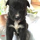 Adopt A Pet :: 4487