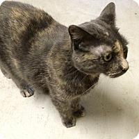 Adopt A Pet :: Holly - Warrenton, MO