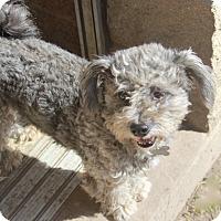 Adopt A Pet :: Baggins - Norwalk, CT