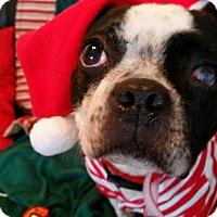 Adopt A Pet :: Cyrus - Weatherford, TX