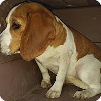 Adopt A Pet :: Jade - Freeport, ME