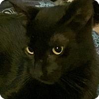 Adopt A Pet :: Diesel - Cerritos, CA