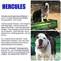Adopt A Pet :: Hercules - Clear Lake, IA