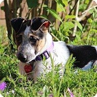 Adopt A Pet :: LULA MAE - Olive Branch, MS