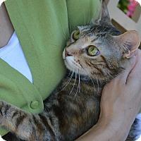Adopt A Pet :: Cleopatra - Stanford, CA