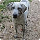 Adopt A Pet :: Greystoke
