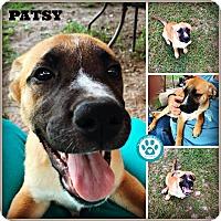 Adopt A Pet :: Patsy - Kimberton, PA