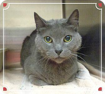 Domestic Shorthair Cat for adoption in Marietta, Georgia - DEE (R)