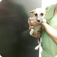 Adopt A Pet :: Renee - Barnwell, SC