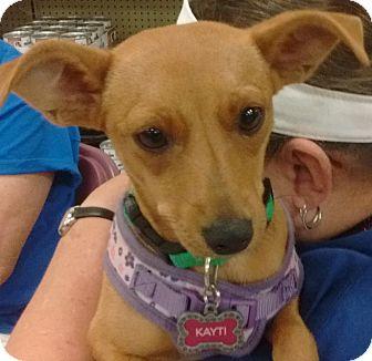 Miniature Pinscher Mix Puppy for adoption in Newnan, Georgia - Kayti