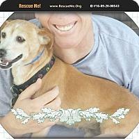 Adopt A Pet :: Snoopy - Los Angeles, CA