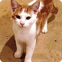 Adopt A Pet :: Owen - Lebanon, PA