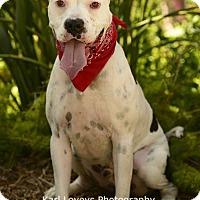 Adopt A Pet :: Enzo-ADOPT Me! - Redondo Beach, CA