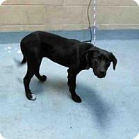 Adopt A Pet :: BELLE - Tulsa, OK