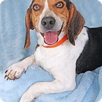 Adopt A Pet :: Duff - Encinitas, CA