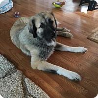 Adopt A Pet :: Rose - Plainfield, IL