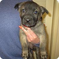 Adopt A Pet :: Shep,collie,husky,etc - Moreno Valley, CA