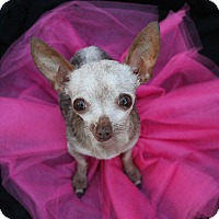 Adopt A Pet :: Minnie - Irvine, CA