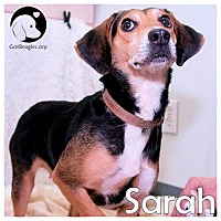 Adopt A Pet :: Sarah - Chicago, IL