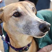 Adopt A Pet :: Pippi - Tucson, AZ