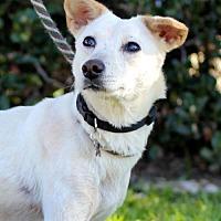 Adopt A Pet :: Wiggle - San Diego, CA