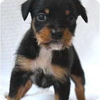 Adopt A Pet :: HARLEY - san diego, CA