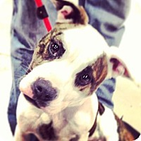 Adopt A Pet :: Dotty - Rockaway, NJ