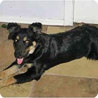 Adopt A Pet :: Marissa - Scottsdale, AZ