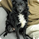 Adopt A Pet :: Barkley