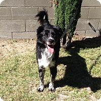Adopt A Pet :: ROYCE - San Pedro, CA
