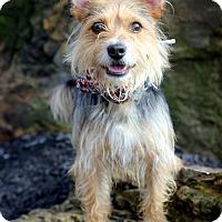 Adopt A Pet :: Tyson - Dalton, GA