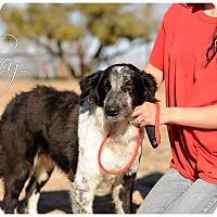 Adopt A Pet :: Lucy - Allen, TX