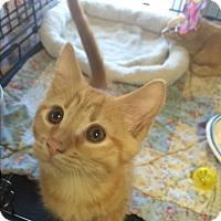 Adopt A Pet :: Lana #1 - Lunenburg, MA