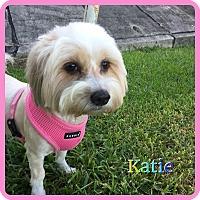 Adopt A Pet :: Katie - Hollywood, FL