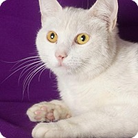 Adopt A Pet :: Whimsey - Gilbert, AZ