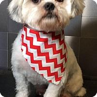 Adopt A Pet :: Kris Kristofferson - McKinney, TX