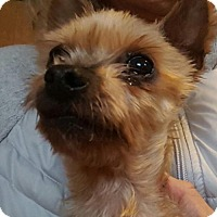 Adopt A Pet :: LEESHA - Smithfield, PA