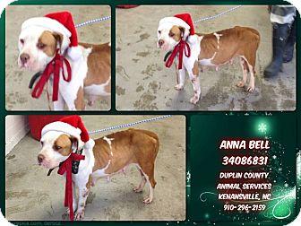 American Staffordshire Terrier/Bulldog Mix Dog for adoption in Kenansville, North Carolina - ANNA BELL