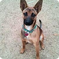 Adopt A Pet :: Pumpkin - Fredericksburg, VA