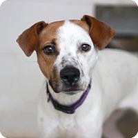 Adopt A Pet :: LEILA - Kyle, TX