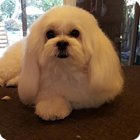Adopt A Pet :: EMILY - Fort Lauderdale, FL