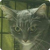 Adopt A Pet :: Mittens - Winchester, CA