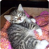 Adopt A Pet :: Tony Danza - Cleveland, OH
