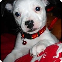 Adopt A Pet :: Biscuit - Glen Burnie, MD