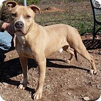 Adopt A Pet :: Milo - Athens, GA
