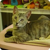 Adopt A Pet :: Wolftriss - Ocala, FL