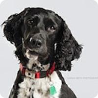 Adopt A Pet :: Abby - Minneapolis, MN