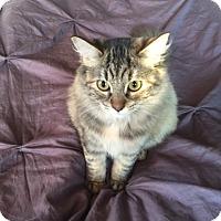 Adopt A Pet :: Rupa - Walnut Creek, CA