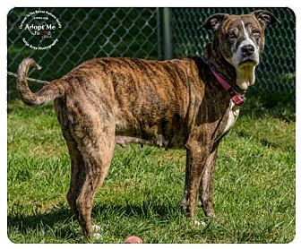 Hound (Unknown Type)/Shepherd (Unknown Type) Mix Dog for adoption in Batavia, Ohio - Fanny